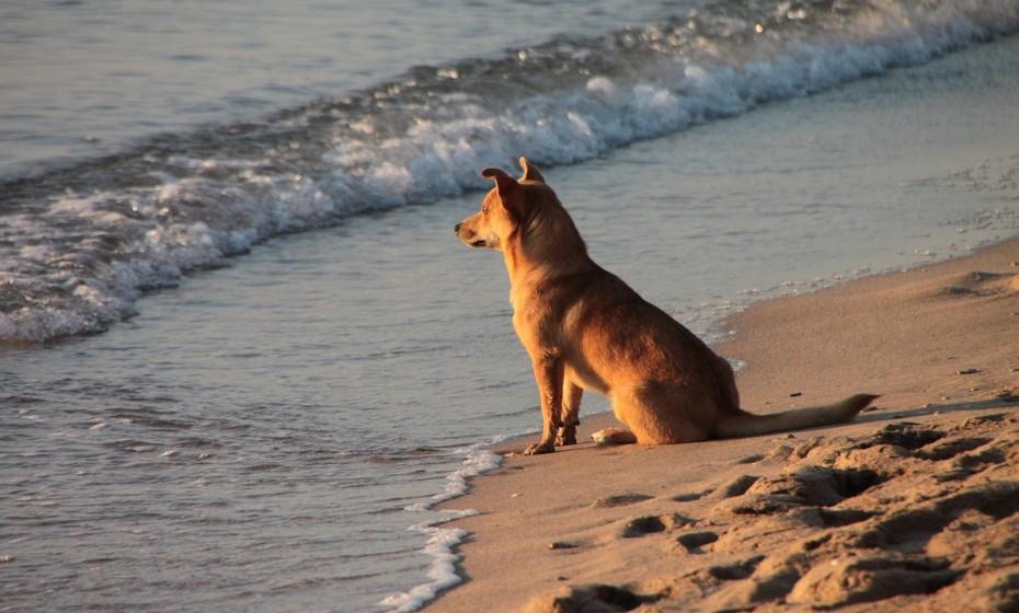 Devido ao seu sentido territorial, os cães protegem a casa e a família que lá vive com a sua vida. Algumas raças, os chamados cães de guarda, podem ter esta característica mais desenvolvida,  mas a verdade é que todos os cães têm este instinto.