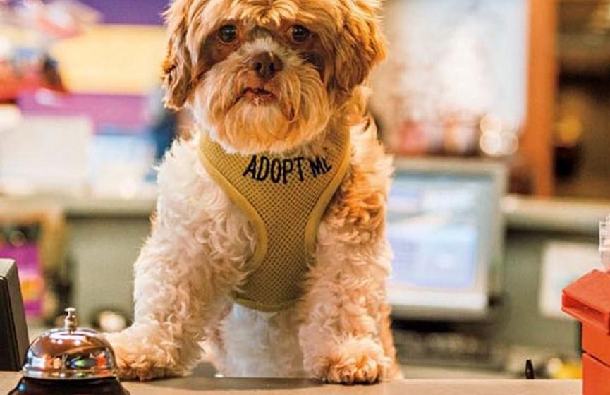 Imagine chegar a um hotel e, logo na entrada, ser recebido por vários cães, além dos funcionários...