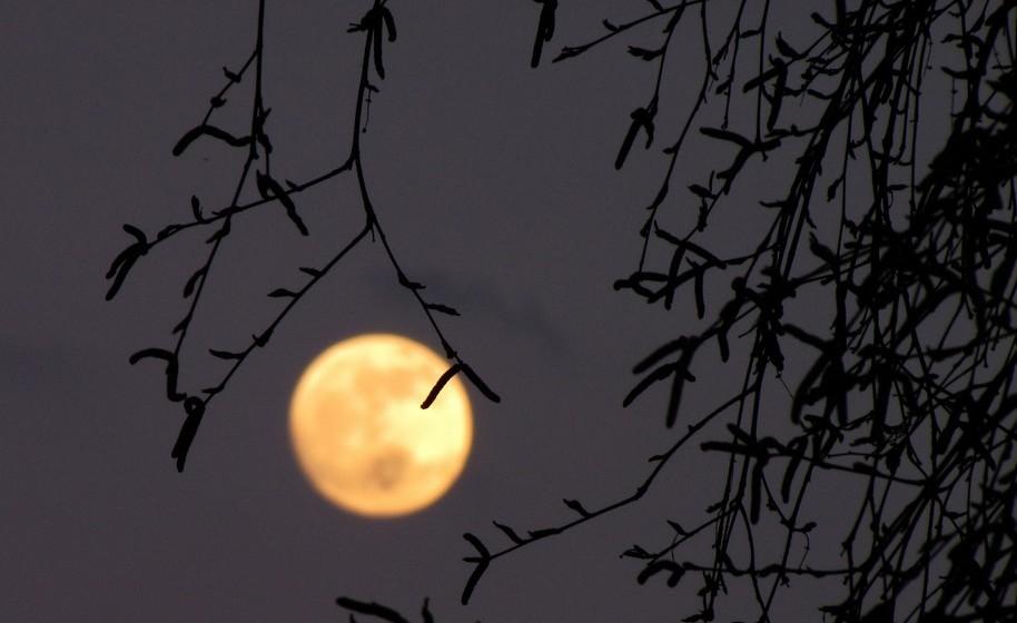 Imagem da lua: Dizem que é um amuleto muito poderoso. Pode rodear-se de luas da forma que preferir: como objeto de decoração, num colar ou brinco, um estampado numa t-shirt, etc.