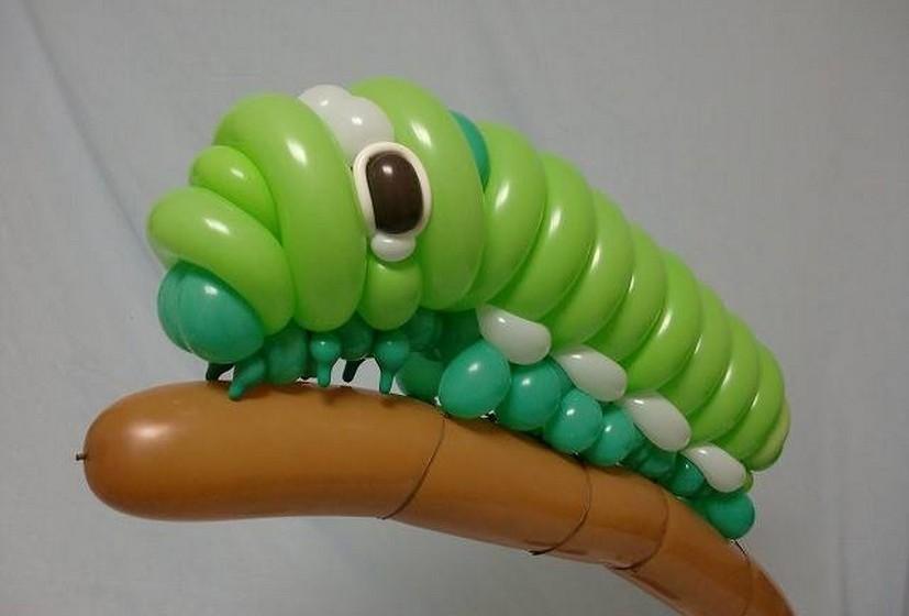 Uma lagarta.