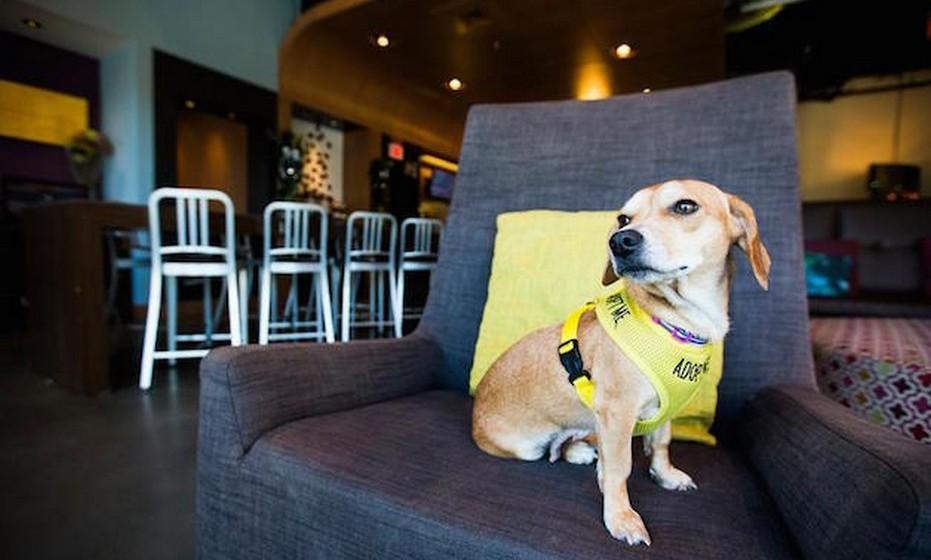 Na sua página, o hotel Aloft partilha frequentemente imagens dos cães felizes com a sua vida na unidade hoteleira e também imagens dos animais com os turistas.