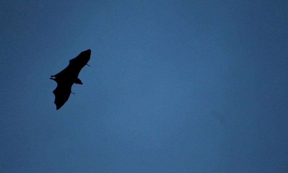 Há morcegos no castelo. Durante o verão, o Castelo de S. Jorge convida a um passeio noturno para descoberta, observação e identificação de várias espécies de morcegos que aqui habitam, como o morcego-rabudo, o morcego-anão, o morcego-de-água ou o morcego-hortelão. Na companhia de um biólogo, fica-se a compreender a importância que os morcegos desempenham no funcionamento dos ecossistemas, desmistificando mitos e lendas que ainda hoje os envolvem numa aura de mistério. Preços a partir de 10€.