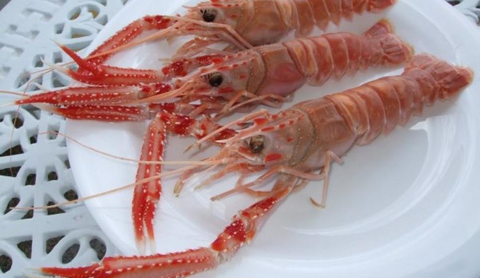 Ganha o lagostim por uma margem muito pequena. Tem 90kcal/100gr contra  as 99 kcal do camarão.