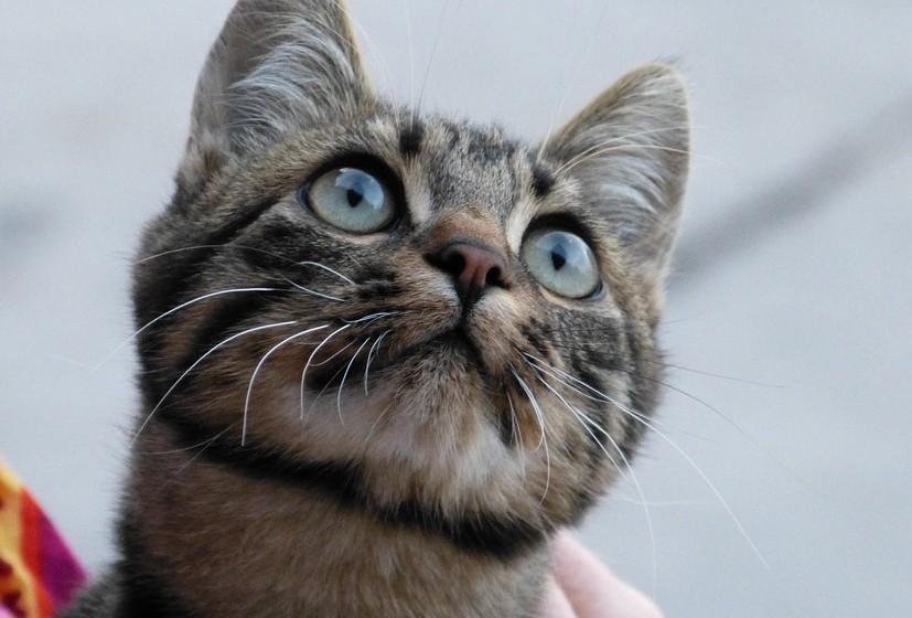 Cabeça: Se o gato estica a cabeça para si é porque quer esfregar-se, como sinal de amizade, ou para mostrar que se sente confiante. Por outro lado, baixar a cabeça pode ser sinal de submissão.