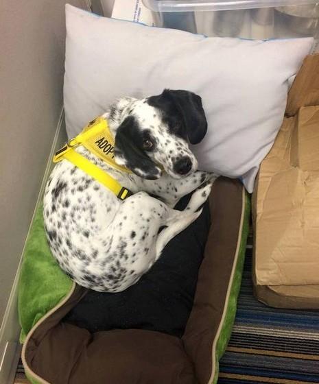 Os cães residentes no hotel Aloft têm direito à sua cama e a todas as comodidades e cuidados.