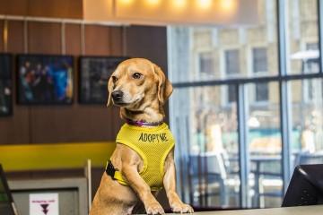 O hotel Aloft Asheville Downtown, nos Estados Unidos, alberga cães resgatados nas suas instalações, até que os hóspedes decidam adotá-los