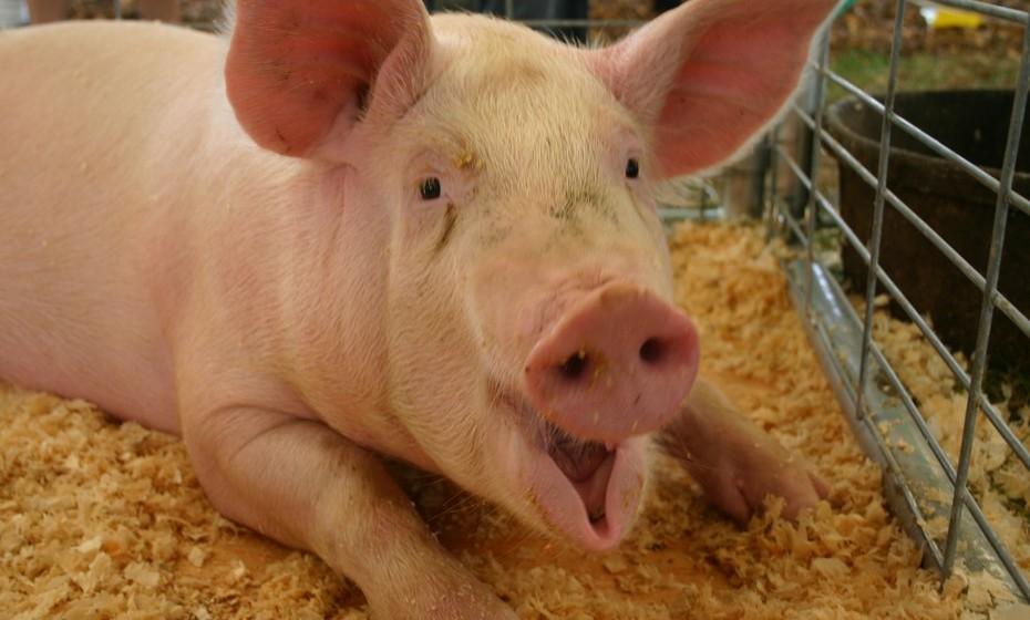 Porco: Sonhar com porcos gordos significa que, a nível financeiro, não terá preocupações, sendo que um porco magro significa o oposto. Ver leitões nos seus sonhos significa boa sorte em novos projetos. Alimentar porcos é sinal de riqueza, já vendê-los é presságio de que vai fazer um bom negócio.
