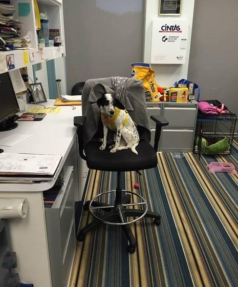 E ainda imagens divertidas dos cães a interpretar os papéis dos funcionários nas suas funções.