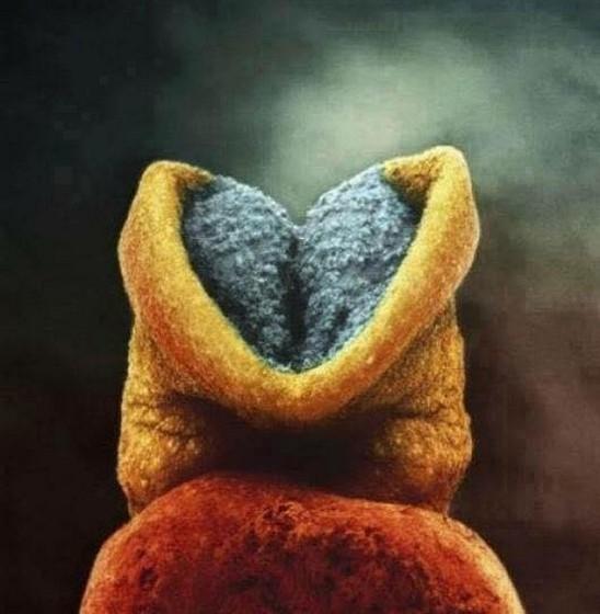 O início do desenvolvimento do cérebro do bebé.